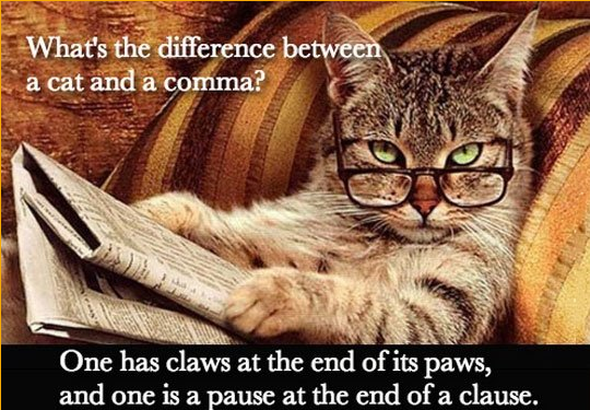 cat.paws